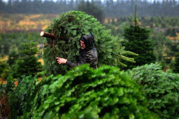 Christmas Trees Tuscaloosa